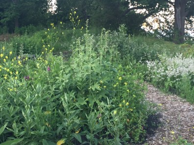 primo garden 2