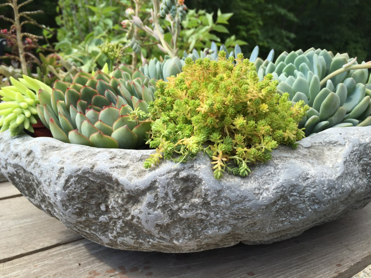 alpine-bowl-succulents-frosty + bright