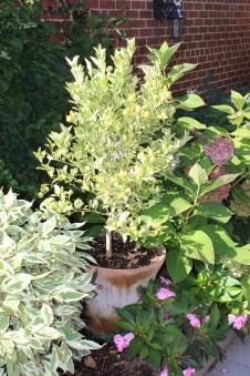 english planter 18-campo de fiori-in garden@artefacthome