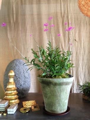 orchid-english planter-campo de fiori@artefacthome