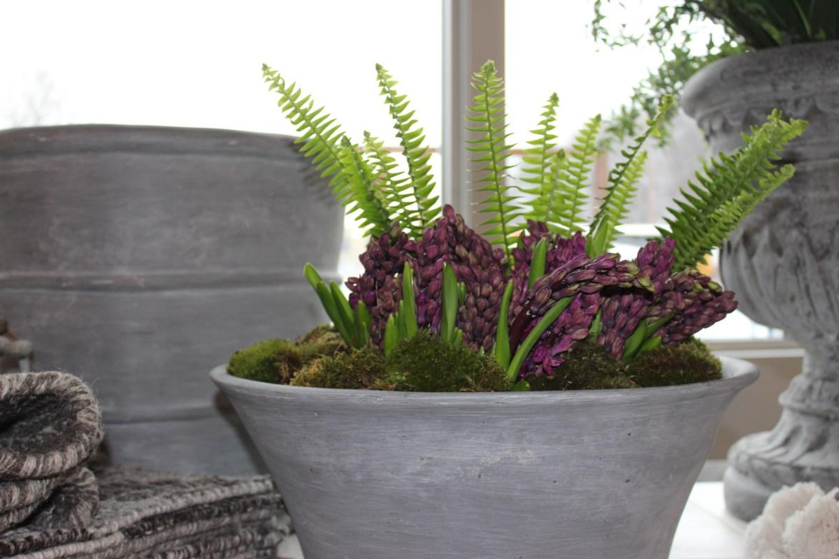 spring hyacinth and fern-modern shape bowl-pennoyer newman@artefacthome