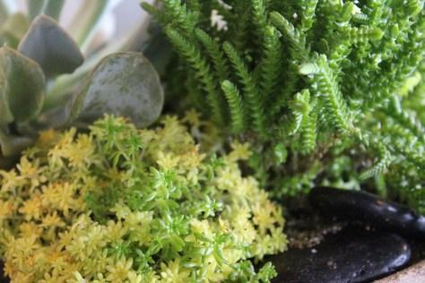succulent + stone detail@artefacthome
