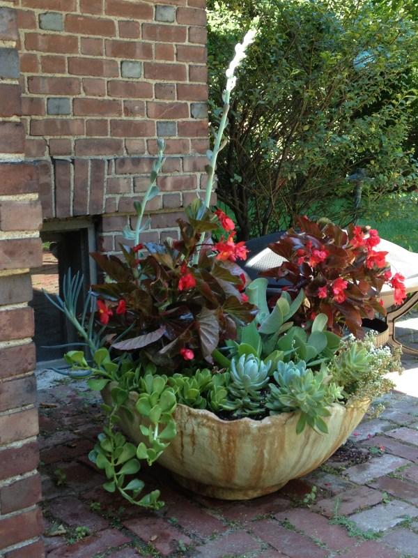 container gardening . pot