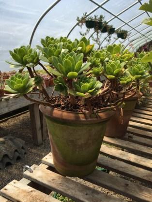 snugharbor-succulents-7