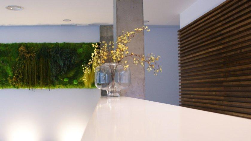 Vista muro vegetal