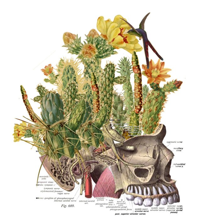 surreal-anatomical-collages-by-travis-bedel-aka-bedelgeuse-2