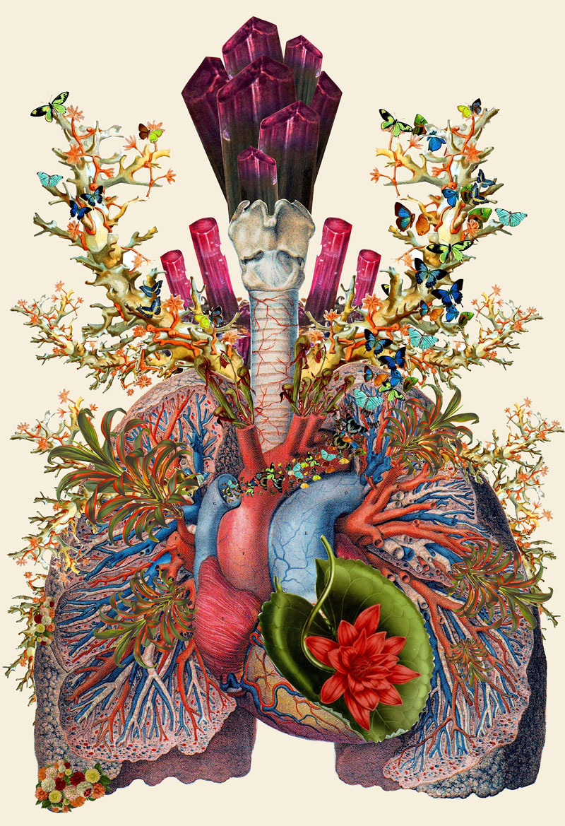 surreal-anatomical-collages-by-travis-bedel-aka-bedelgeuse-8