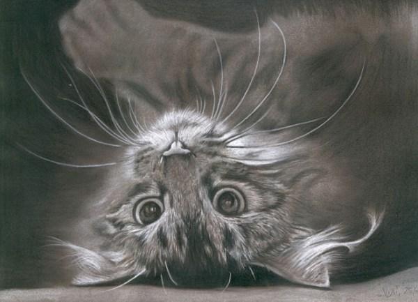 10-cat-drawings.preview