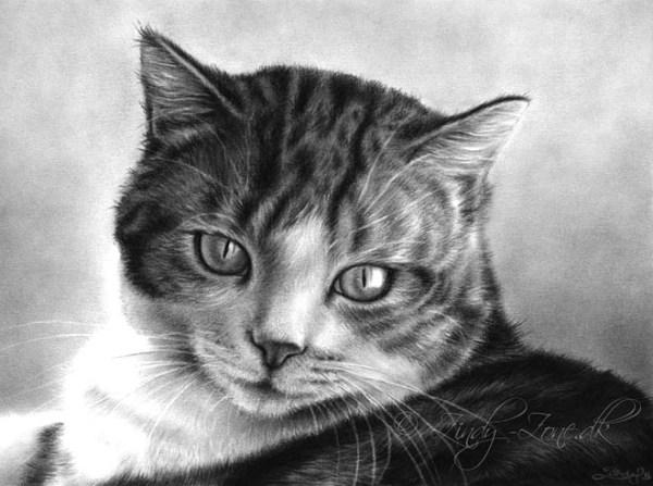 5-cat-drawings