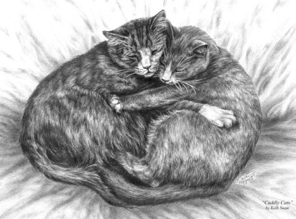 9-cat-pencil-drawings.preview