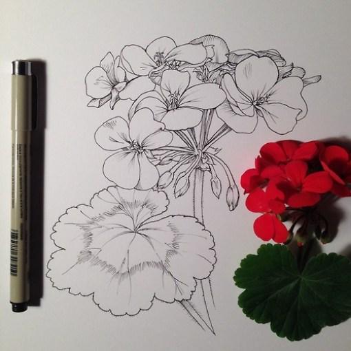 dibujos de flores  9