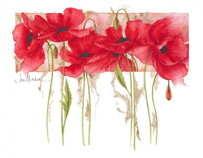 Ilustraciones de flores Jan Harbon 5