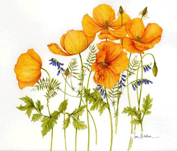 Ilustraciones de flores Jan Harbon 7