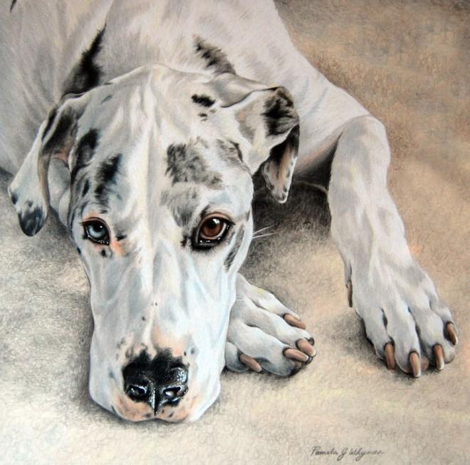 DIbujo perro realistas colores 6