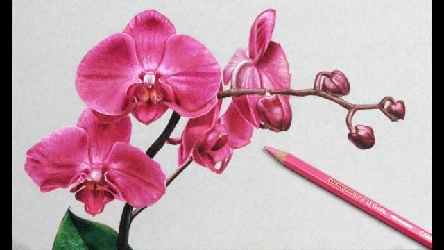 dibujo de flores realistas