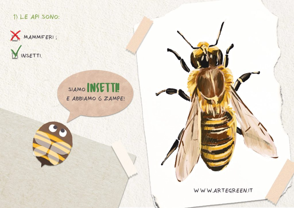 libro ape scuola