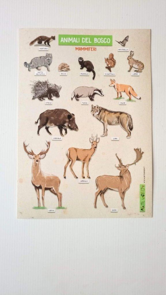 animali bosco mammiferi
