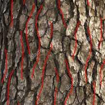 a corteccia-textur