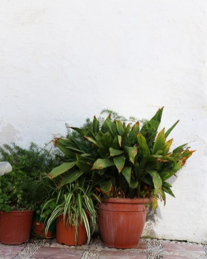 15_oldtown pots