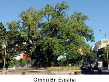ombu_br-entorno-entorno
