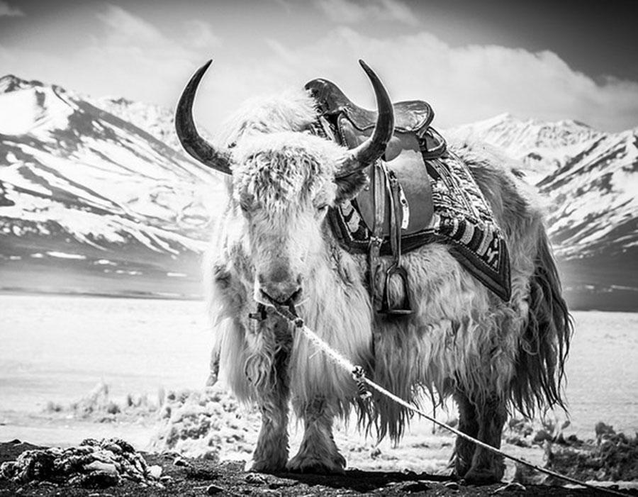 26 fotos impressionantes para quem ama preto e branco