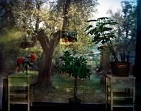 Abelardo Morell, Garden with Olive Tree
