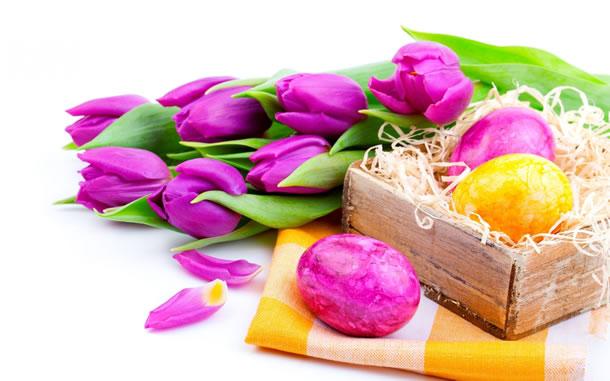 imagens-da-pascoa-tulipas
