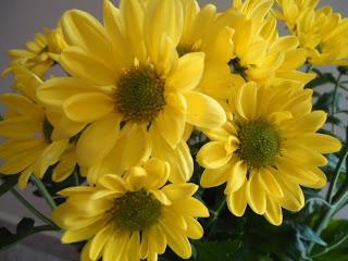 Flores da minha casa…
