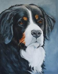 Rosie - Bermese Mtn Dog