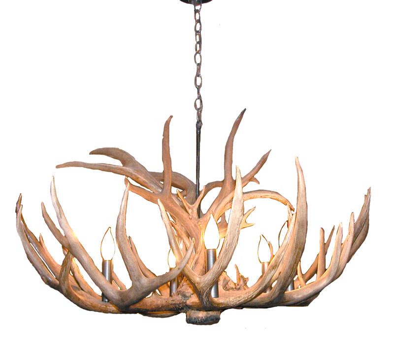 North America Lighting: Whitetail Deer North America Antler Chandelier