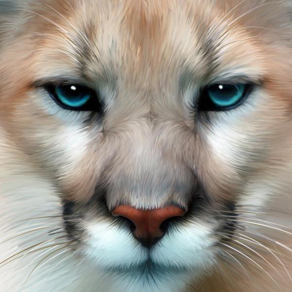 mountain lion Art ID 56489 Art Abyss