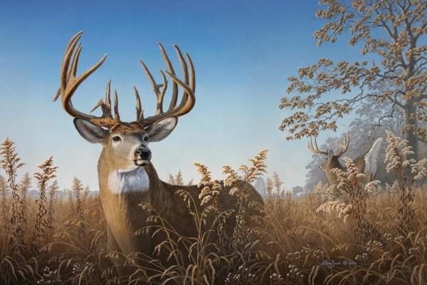 Big Buck Whitetail Deer Art