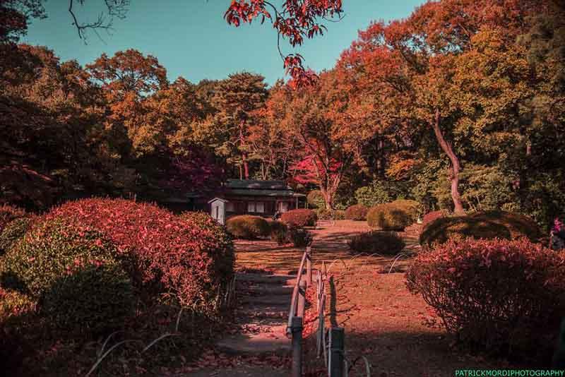 fotografi jepang | Artforia.com