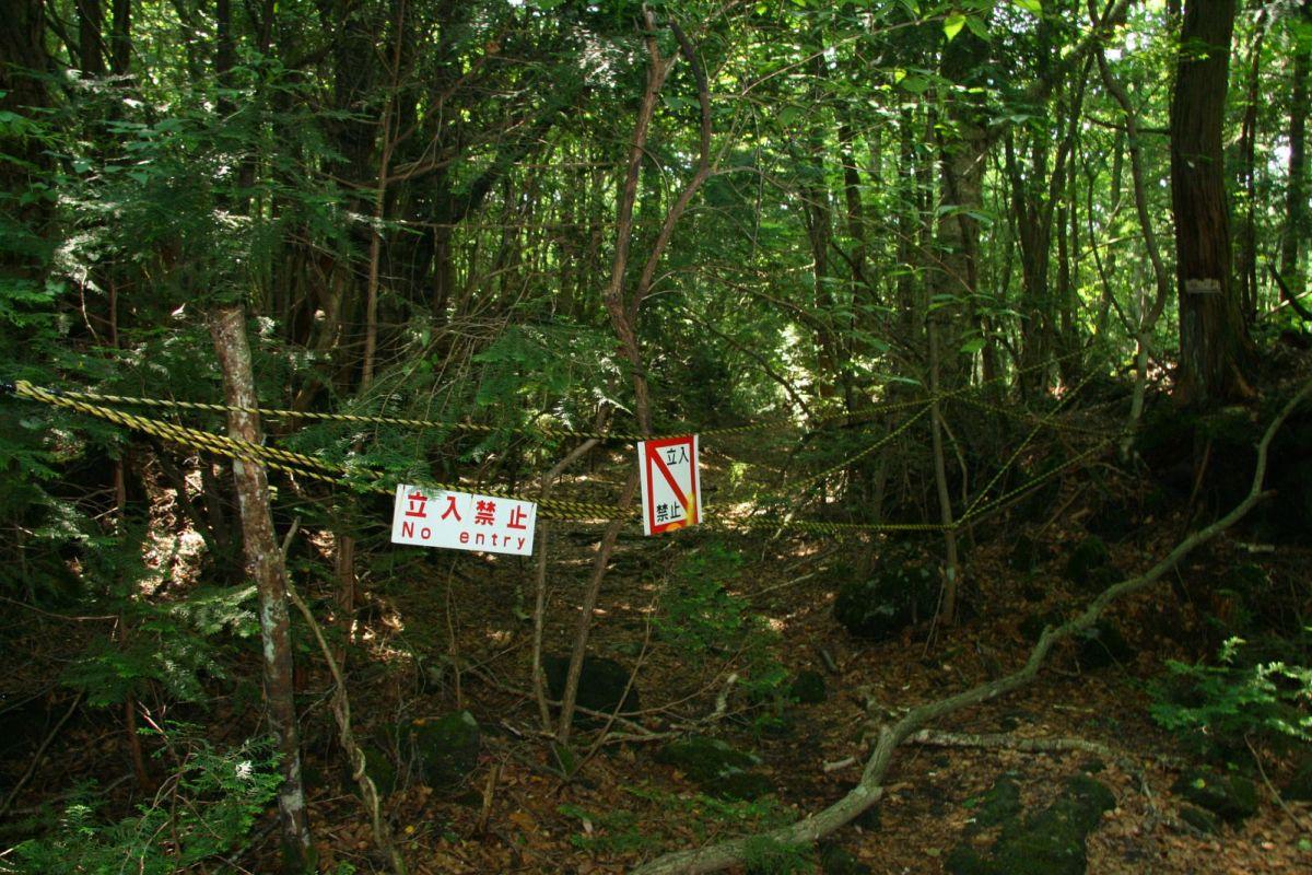 Aokigahara Hutan Terkutuk Yang Dipenuhi Hantu
