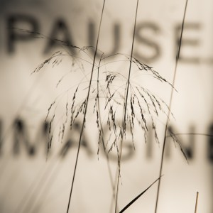 grasses in front of a canvas with the words pause and imagine.