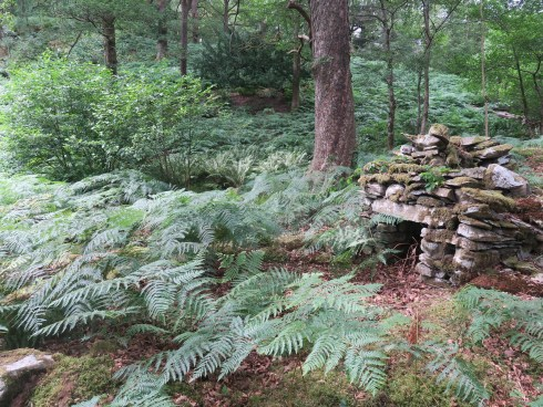An image of an old pitstead or charcoal burning platform in woodlands; there is a lot of green bracken in the foreground, and the pitstead is a drystone wall structure with blocks of stone built around a small square entrance