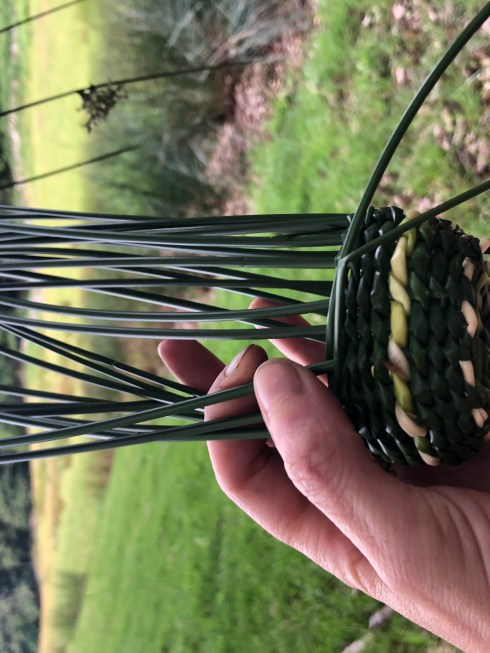 green rushes partly woven to make a basket that is small enough to fit in a hand.