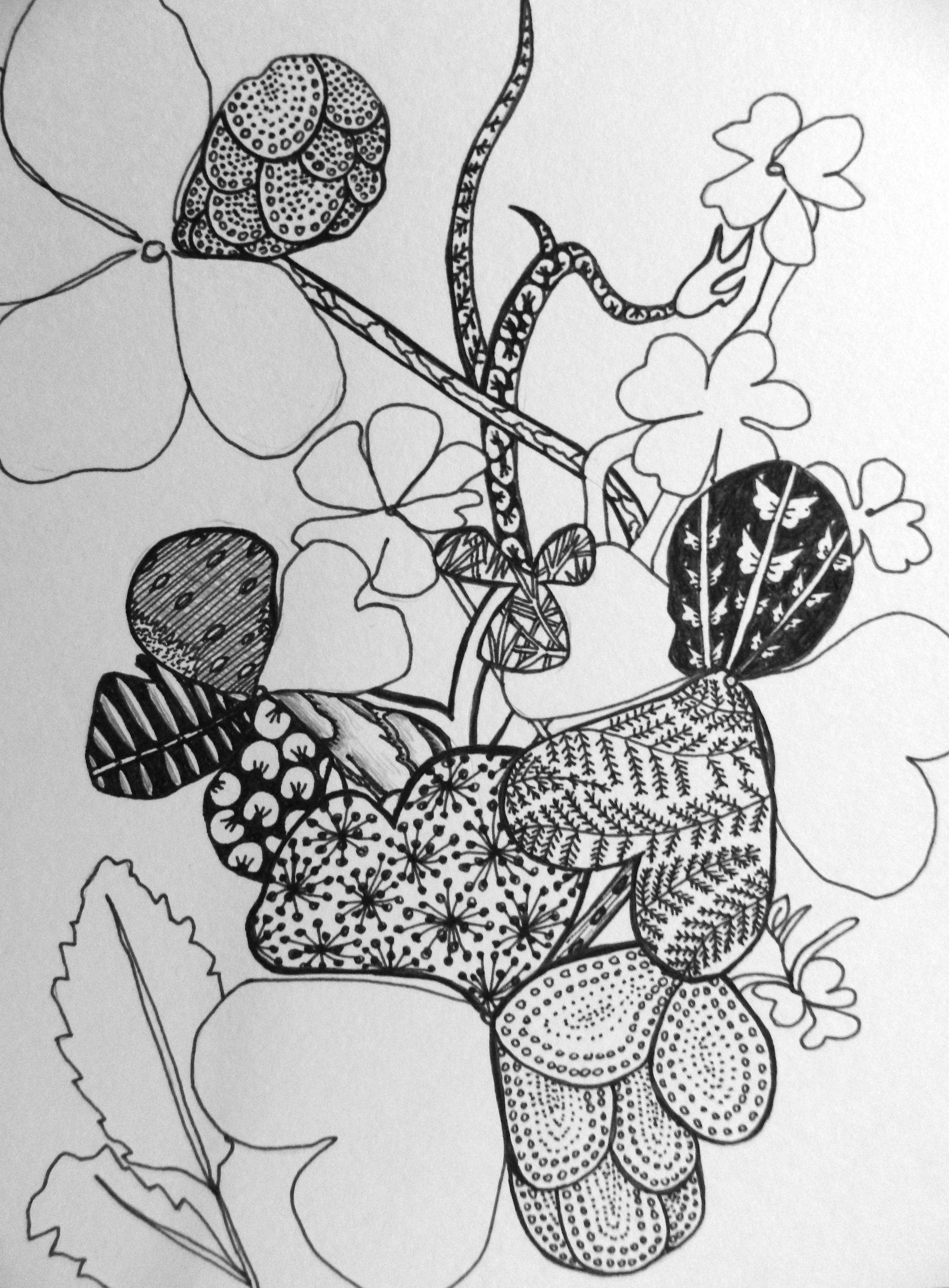 Nature Explorations Zentangle