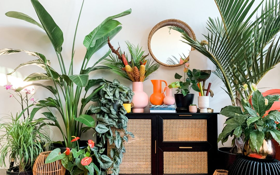 Plant Penthouse's Shayla Owodunni Shares Tips for First-Time Plant Owners