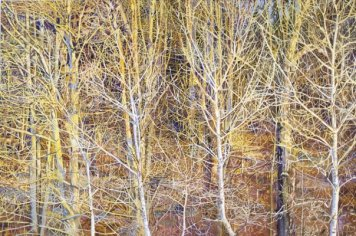 Branches by Leslie Parke