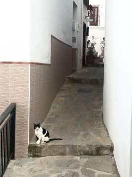 Cat defending her territory