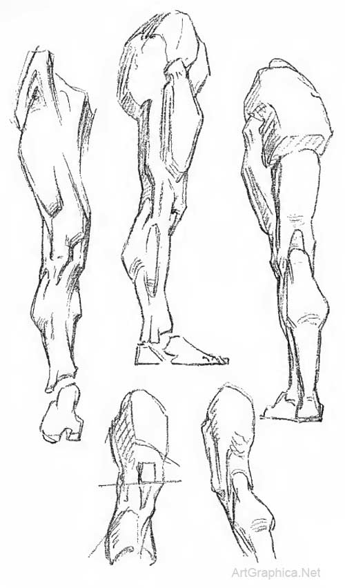 Human Legs Drawing : human, drawing, Constructive, Anatomy, George, Bridgman, Lesson