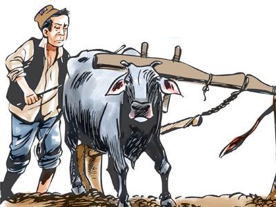 Agriculture-development-farm