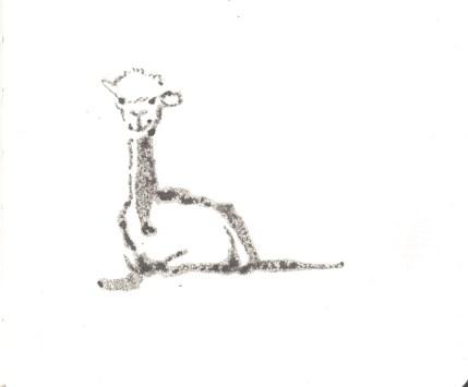 Alpacas-WEBCROP