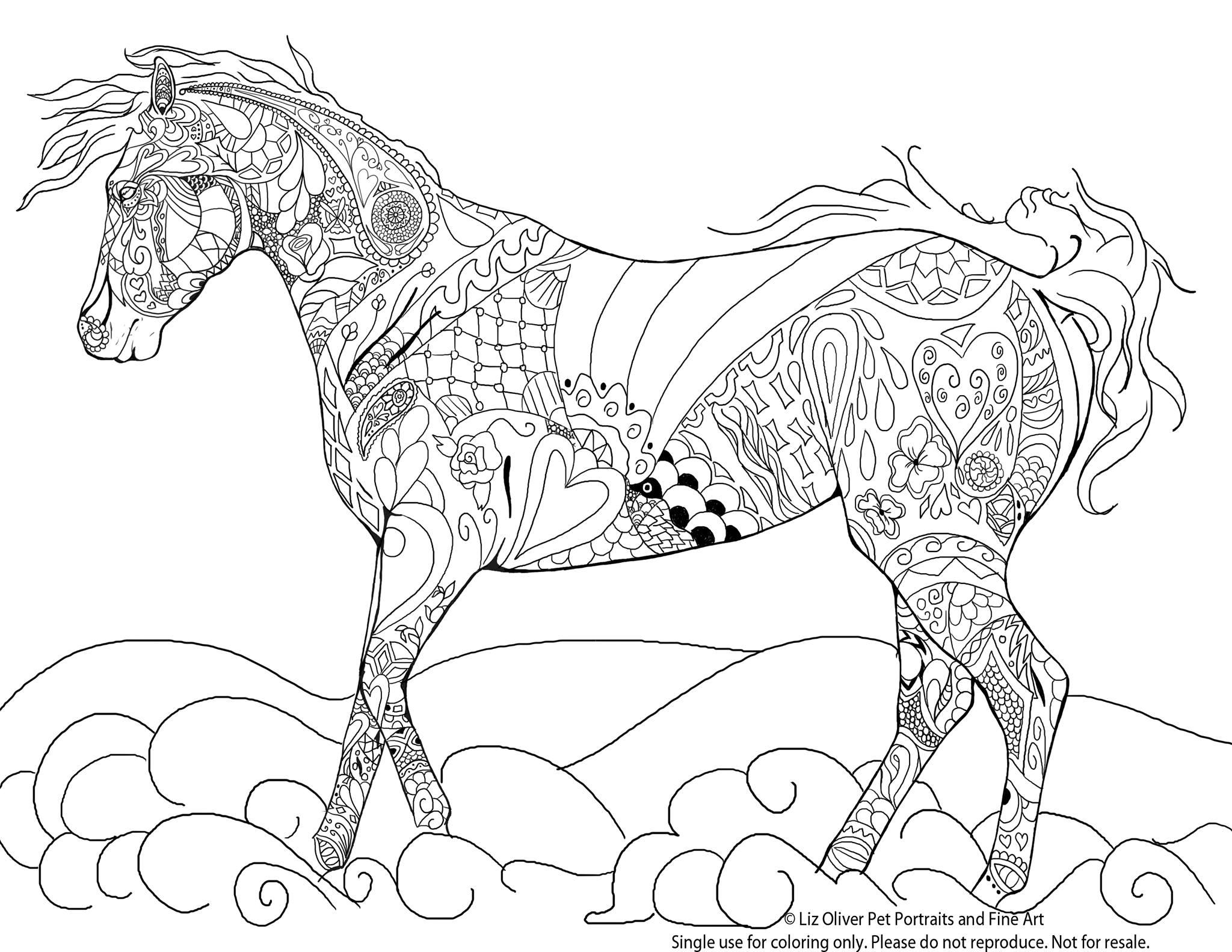 Meilleur de photos de chevaux sauvages gratuites a - Coloriage cheval sauvage ...