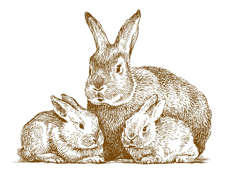 Coloriage gratuit, famille lapin