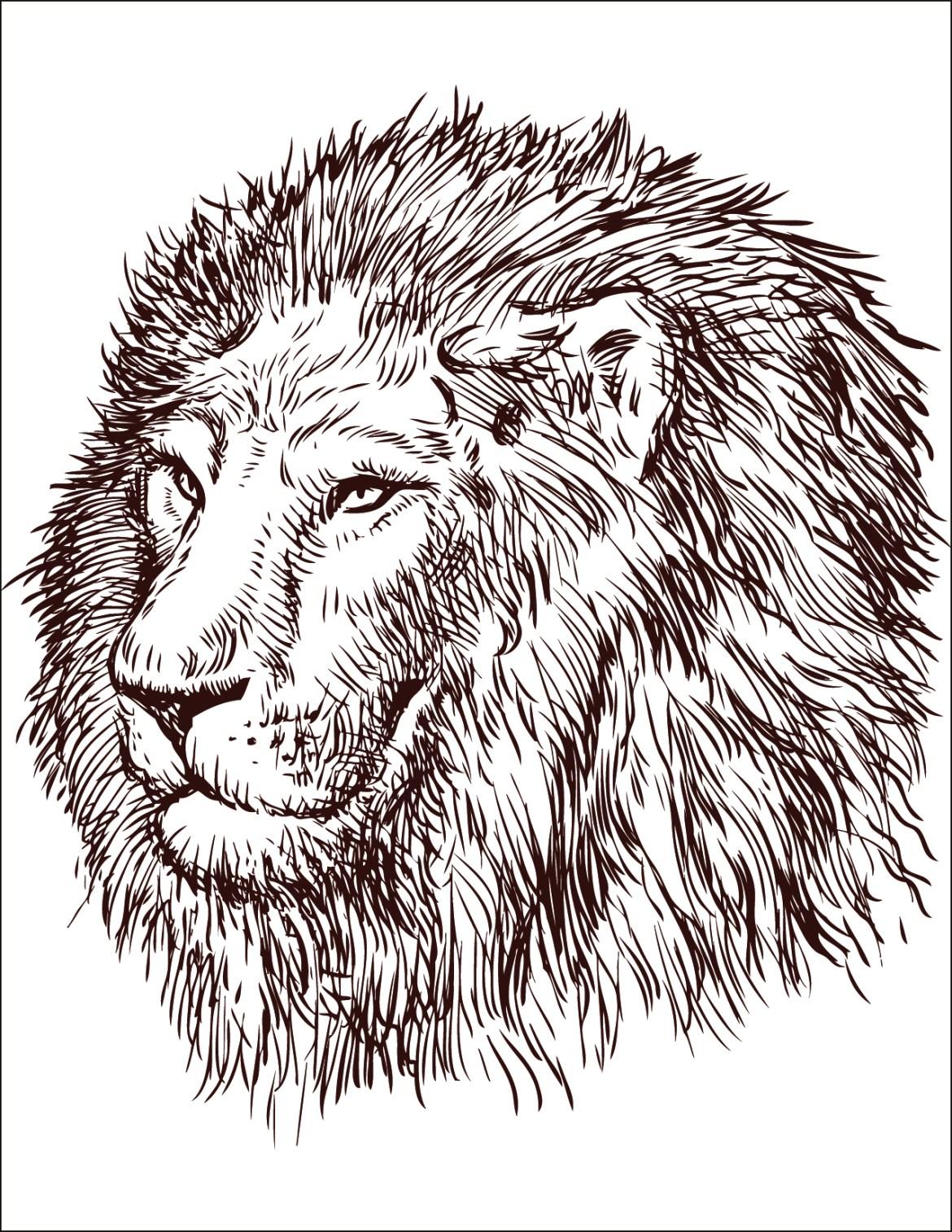 Coloriage gratuit, lion roi de la jungle