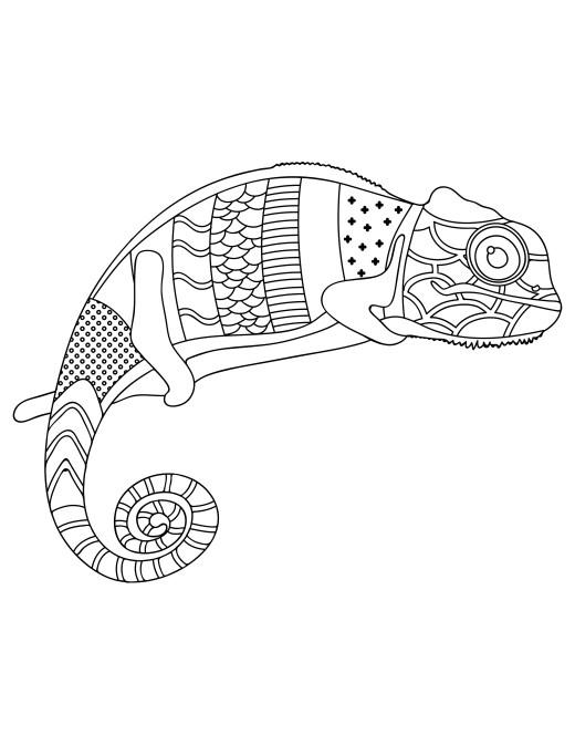 Coloriage de animaux à imprimer caméléon