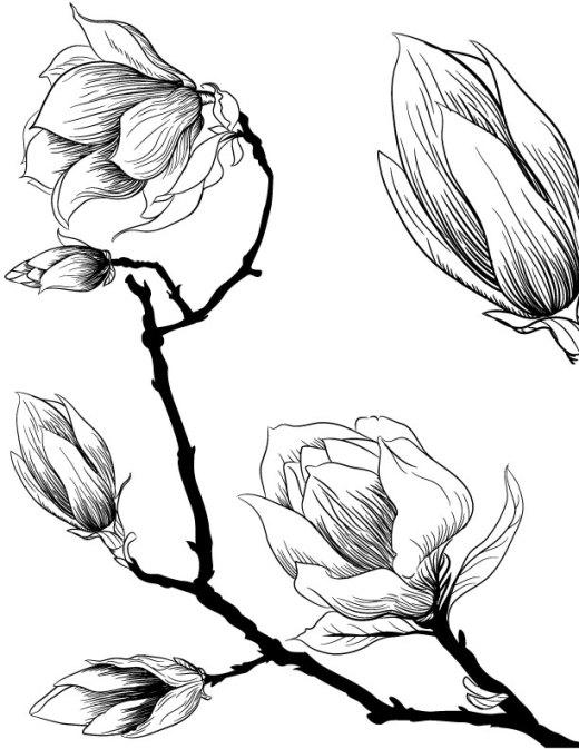 Fleurs de magnolia à imprimer et dessiner pour adulte