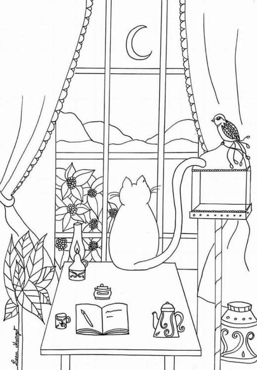 Image de Leen Margot chat devant fenetre